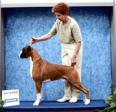 Ch.Taratan Eye of the Tiger winning Best In Group Adelaide Royal September 2005.