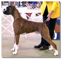 Conner winning Best in Show at the April 2003 BAOV Open Show