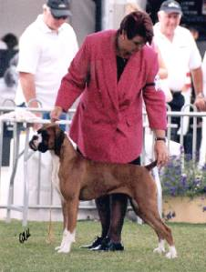 Taratan Red dancer 1st in Junior Bitch Sydney Royal 2005.