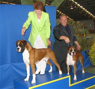 Ch. Taratan Eye of the Tiger winning BIS & Taratan Lacey's Folly winning BJIS at BAOV 50th Anniversary show 2004